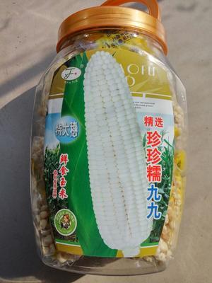 江苏省宿迁市沭阳县珍珍糯九九 双交种 ≥85%