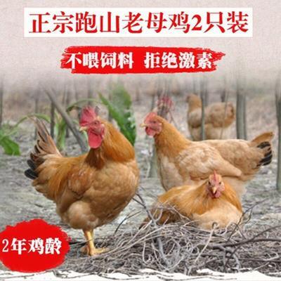 江西省南昌市南昌县鸡肉类 冷冻