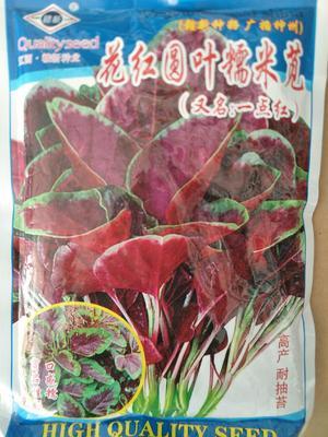 河南省郑州市惠济区红苋菜种子