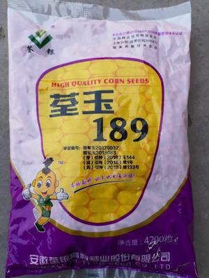 河南省安阳市滑县荃玉189玉米种子 双交种 ≥97%