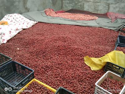 新疆维吾尔自治区阿克苏地区阿瓦提县阿克苏灰枣 统货