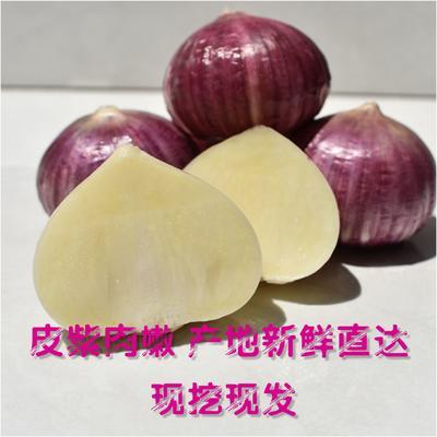 云南省昆明市东川区独头蒜 2.5cm 独头