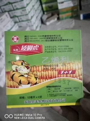河南省安阳市内黄县玉米控旺  水剂 支装 低毒 玉米矮脚虎20gx5