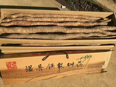 河南省焦作市温县铁棍山药  50~70cm 还有80,90公分的