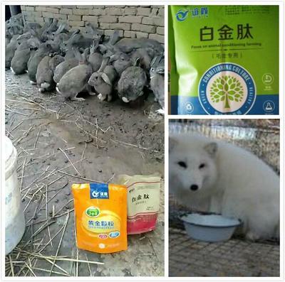 河南省郑州市金水区兔饲料