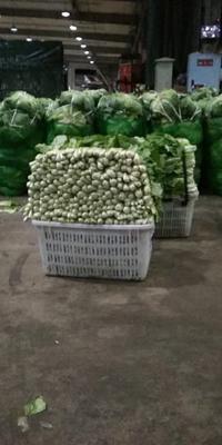 四川省绵阳市涪城区速生小白菜 15~20cm