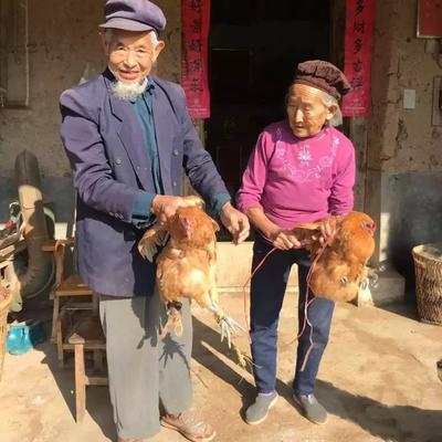 重庆彭水苗族土家族自治县鸡肉类 新鲜