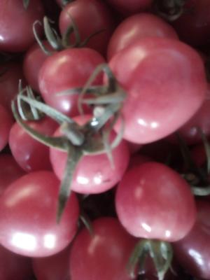 这是一张关于圣宝圣女果 的产品图片
