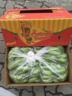 上海虹口区菲律宾香蕉 七成熟