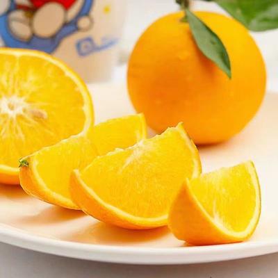 这是一张关于鹿寨蜜橙 80-85mm 4两以下 的产品图片