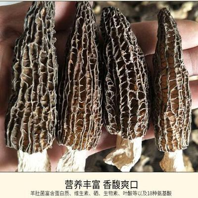 河南省洛阳市嵩县干羊肚菌 散装 1年以上