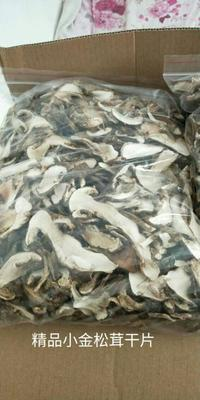 四川省阿坝藏族羌族自治州小金县干松茸 袋装 1年