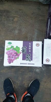 河北省石家庄市晋州市巨峰葡萄 0.4-0.6斤 5%以下 2次果
