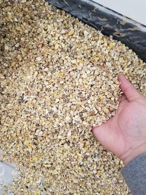 广东省广州市增城区碎玉米 杂质很少 水份14%-16%