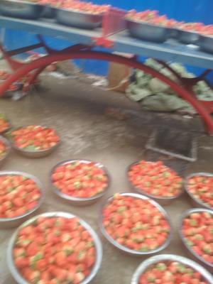 四川省成都市简阳市巧克力味草莓 30克以上