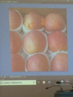 山东省临沂市蒙阴县红富士苹果 85mm以上 条红 纸袋