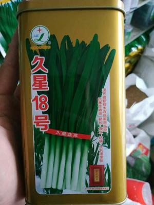 江苏省宿迁市沭阳县韭菜种子 久星18  半斤