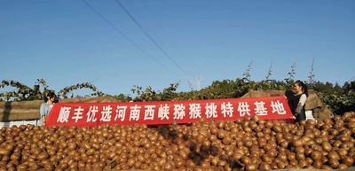 河南省南阳市西峡县徐香猕猴桃 80~100克