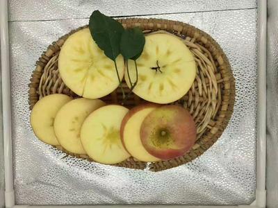 山西省运城市盐湖区红富士苹果 85mm以上 统货 膜袋