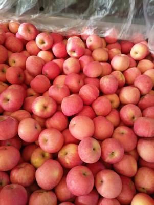 山东省青岛市平度市红富士苹果 85mm以上 条红 纸袋