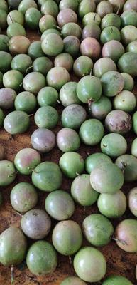广西壮族自治区玉林市容县紫红色百香果 60 - 70克