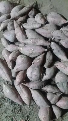 这是一张关于秦薯五号 混装通货 紫皮 的产品图片