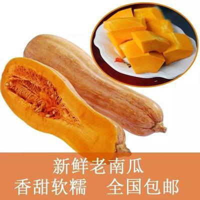 重庆彭水苗族土家族自治县板栗南瓜 2~4斤