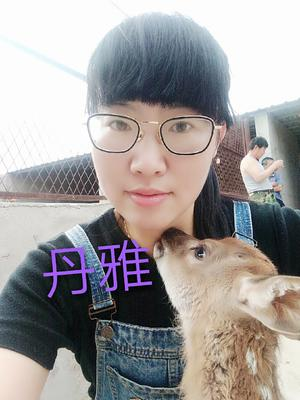 吉林省长春市双阳区鹿角    新鲜梅花鹿鹿鞭
