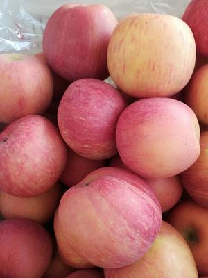 山东省临沂市蒙阴县红富士苹果 75mm以上 条红 纸袋