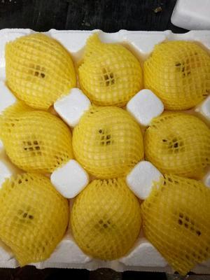 山东省烟台市莱阳市奶油富士 80mm以上 黄色 纸袋