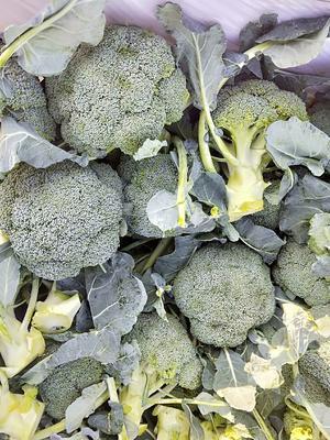 这是一张关于耐寒优秀西兰花 0.8~1.2斤 10~15cm 的产品图片