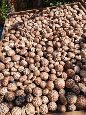 河南省三门峡市卢氏县普通干香菇 散装 1年以上