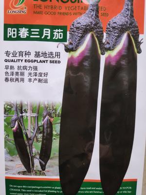 江苏省宿迁市沭阳县茄子种子 杂交种 ≥75%