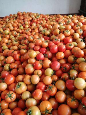 这是一张关于瑞红香瓜 2斤以上 的产品图片