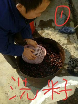 湖南省长沙市浏阳市压榨一级山茶油
