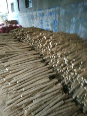 河北省邯郸市大名县小白嘴白山药  70~90cm 5O公分以上。