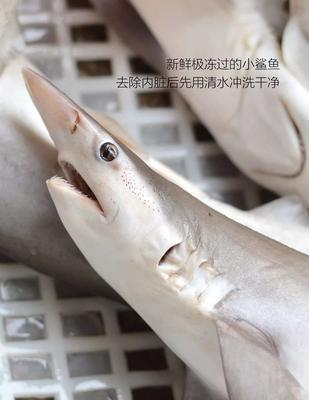福建省漳州市诏安县鱼丸