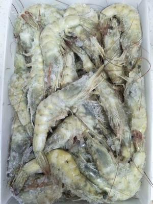 辽宁省大连市普兰店市冻海虾