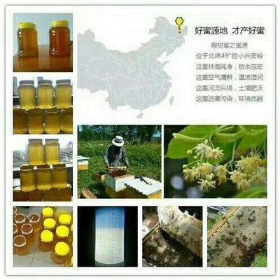 这是一张关于椴树蜜 散装 2年以上 100% 的产品图片