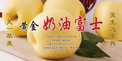 山东省临沂市蒙阴县奶油富士 80mm以上 黄色 纸+膜袋