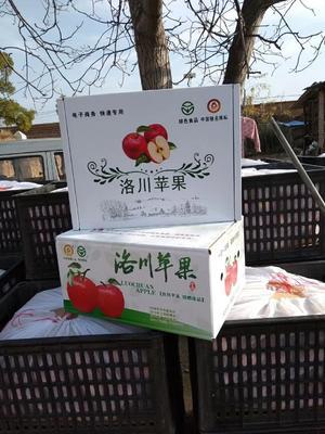 陕西省延安市洛川县红富士苹果  纸袋 80mm以上 片红 精品礼盒装