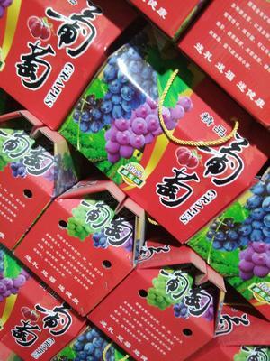 河北省石家庄市晋州市巨峰葡萄 1-1.5斤 5%以下 1次果