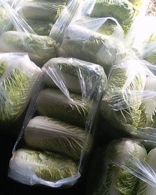 辽宁省铁岭市铁岭县新绿储三号白菜 3~6斤 净菜