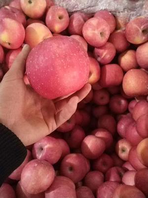 山东省日照市东港区红富士苹果 80mm以上 条红 纸袋