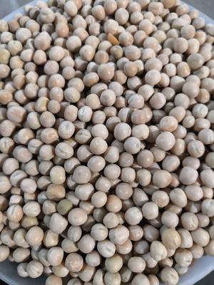 山东省青岛市黄岛区干白豌豆