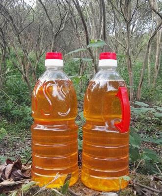 安徽省六安市舒城县野生山茶油