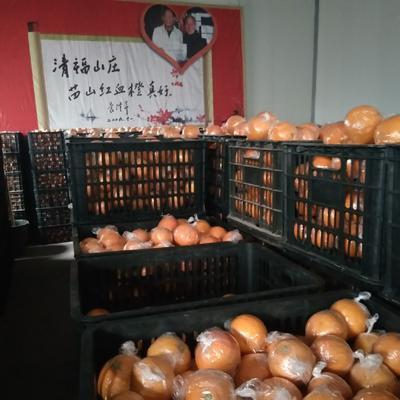 湖南省怀化市麻阳苗族自治县塔罗科血橙 55 - 60mm 4两以下