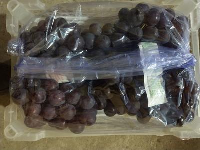 辽宁省锦州市北镇市巨峰葡萄 1-1.5斤 5%以下 1次果