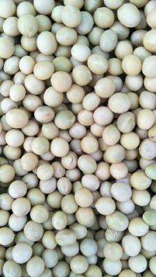 黑龙江省黑河市嫩江县有机黄豆 生大豆 2等品