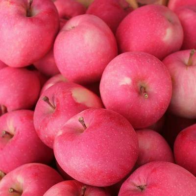 山东省临沂市沂水县红富士苹果 75mm以上 片红 纸袋